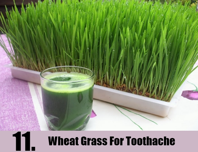 Wheat Grass For Toothache