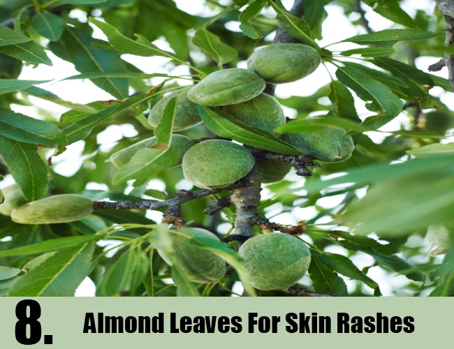 Almond Leaves For Skin Rashes
