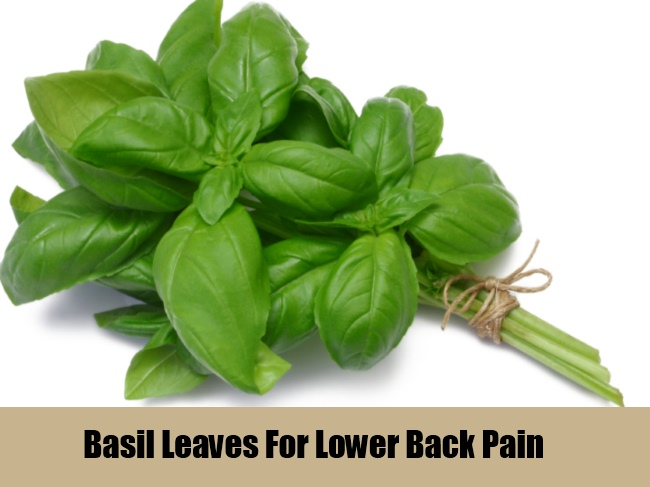 Basil Leaves Prevents Lower Back Pain