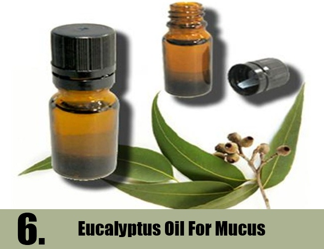Eucalyptus Oil For Mucus