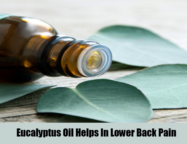 Eucalyptus Oil Prevents Lower Back Pain