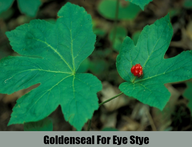 Goldenseal For Eye Stye