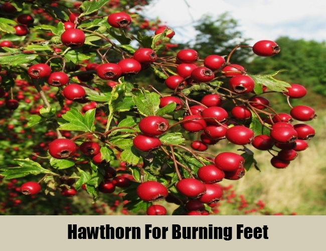 Hawthorn For Burning Feet
