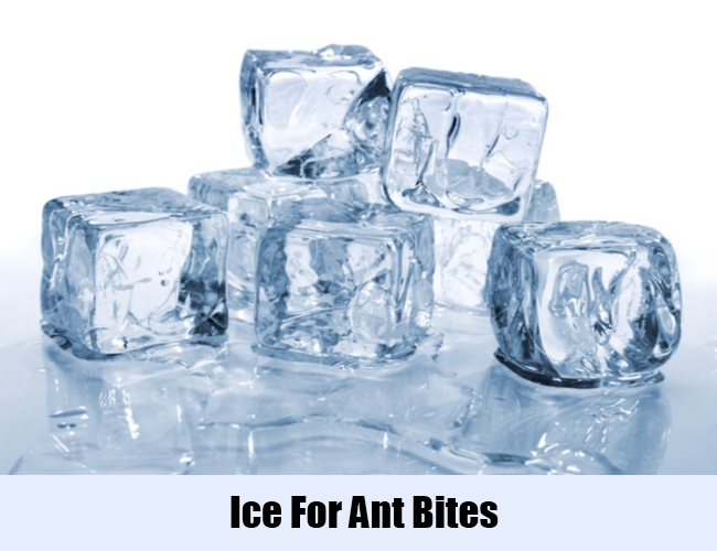 Ice For Ant Bites