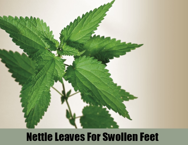 Nettle Leaves For Swollen Feet