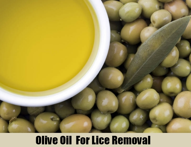 Olive Oil  For Lice Removal