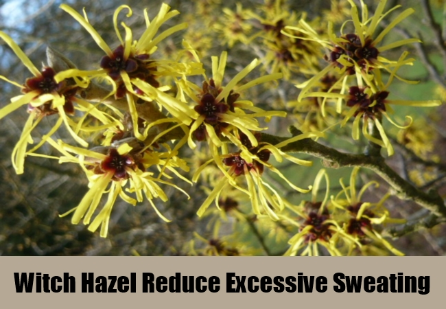 Witch Hazel Reduce Excessive Sweating