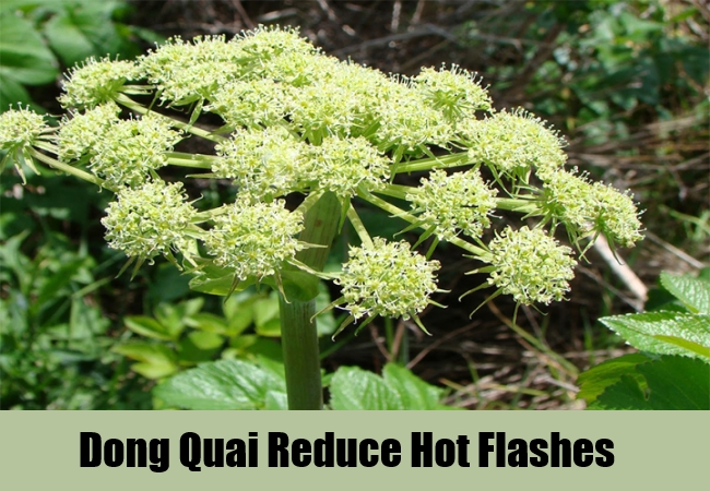 Dong Quai Reduce Hot Flashes