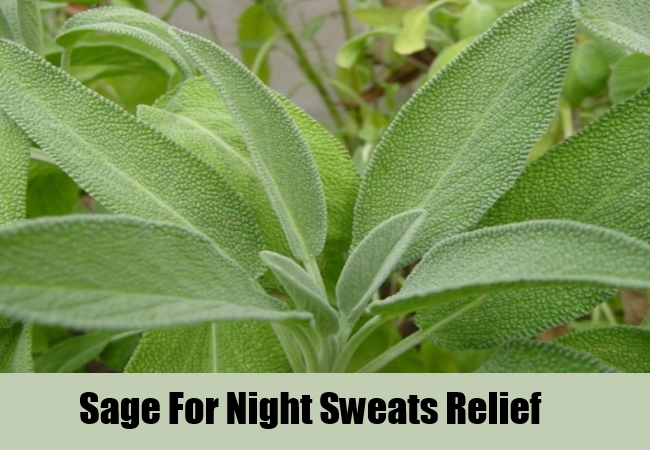 Sage For Night Sweats Relief