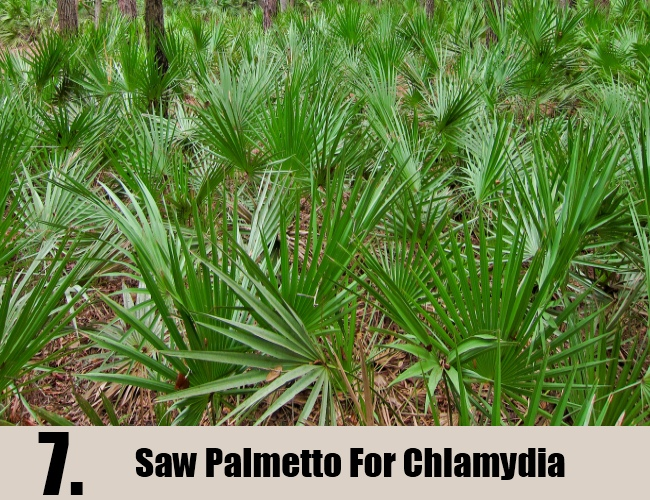 Saw Palmetto For Chlamydia