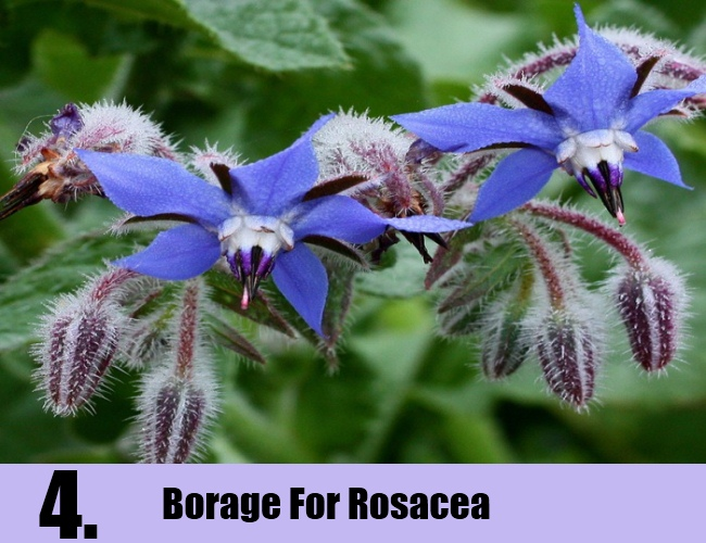 Borage For Rosacea