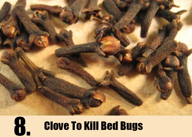 Clove To Kill Bed Bugs