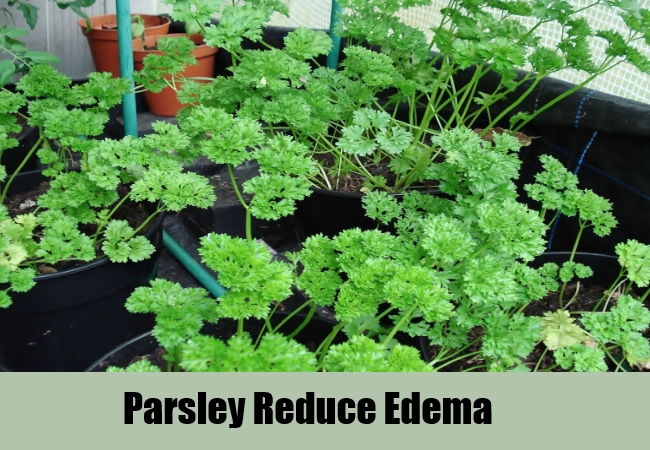 Parsley Reduce Edema