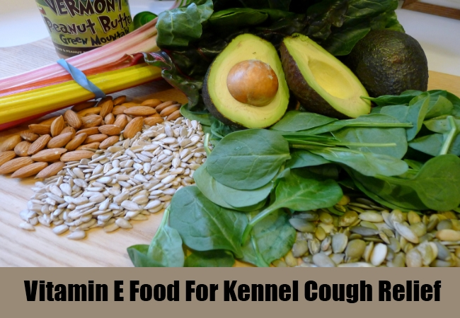 Vitamin E Food For Kennel Cough Relief