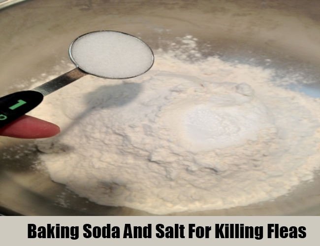 Baking Soda And Salt For Killing Fleas