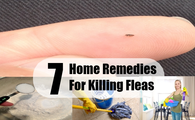 Home Remedies For Killing Fleas
