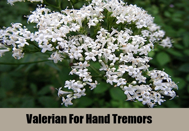 Valerian For Hand Tremors