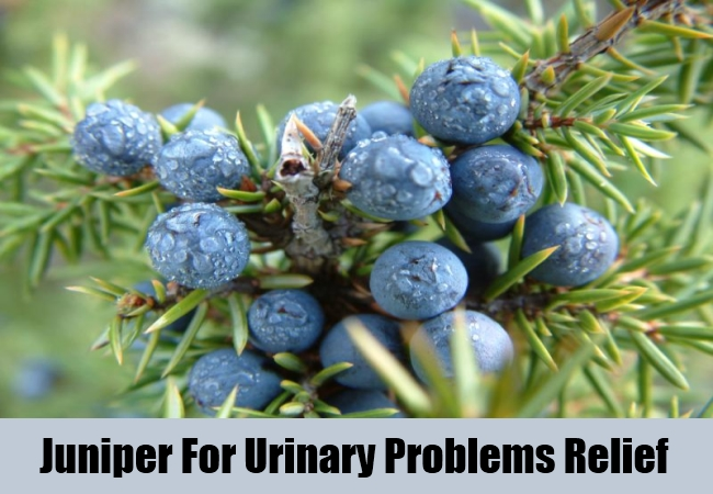 Juniper For Urinary Problems Relief