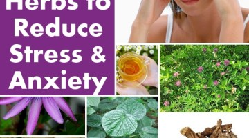 Herbs to Reduce Stress and Anxiety