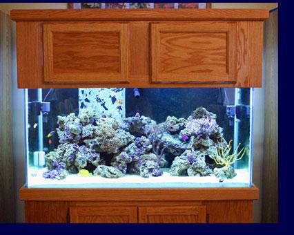 My Sea: My Aquarium Hobby   Saltwater Aquarium Guide on Sea and Sky