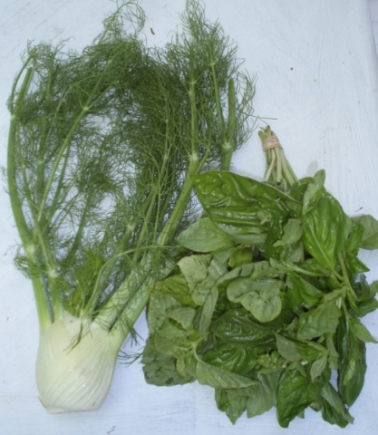 fennel and basil