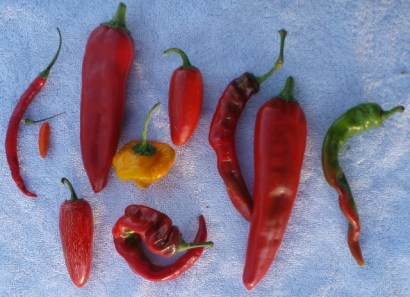 pepper varieties