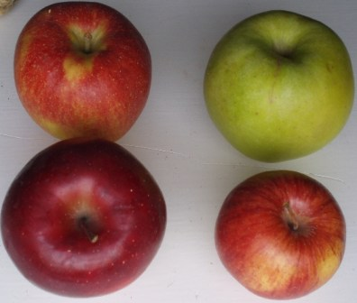 four varieties of apples