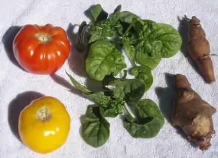 tomatoes and sunchokes