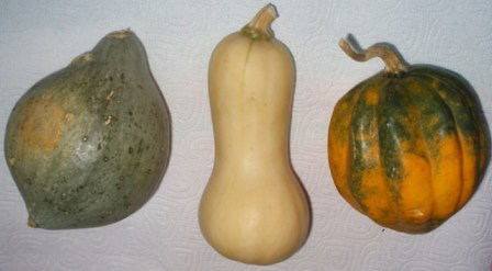 blue hubbard, butternut and acorn squash