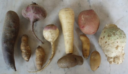 beets, celeriac and other root crops