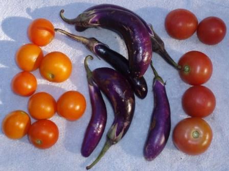tomatoes and eggplant