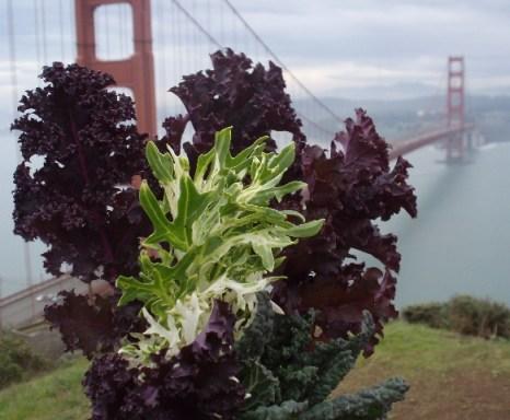 Kale from San Rafael Market