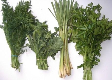 lemon grass and herbs 022506i