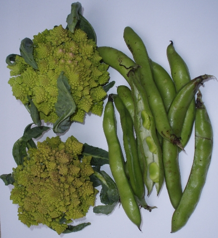 romanesco broccoli and fava beans