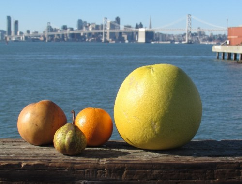 Fruit from Oakland Farmers Market on dock on San Francisco Bay
