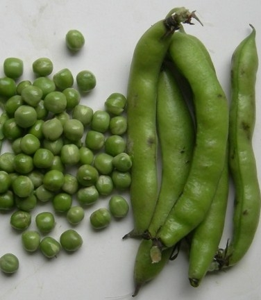peas-hollywood-042907a