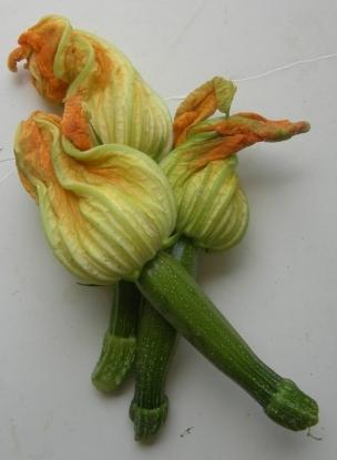 squash-blossoms-061507