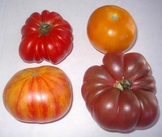 tomatoes-07-23-05