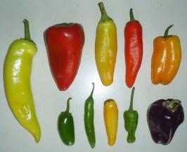 pepper varieties