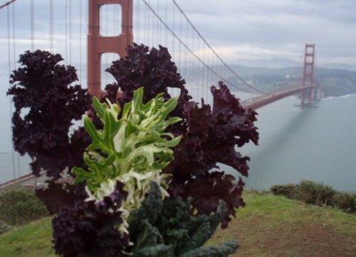 kale at Golden Gate