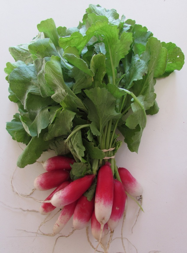 10-23-15 radishes.jpg