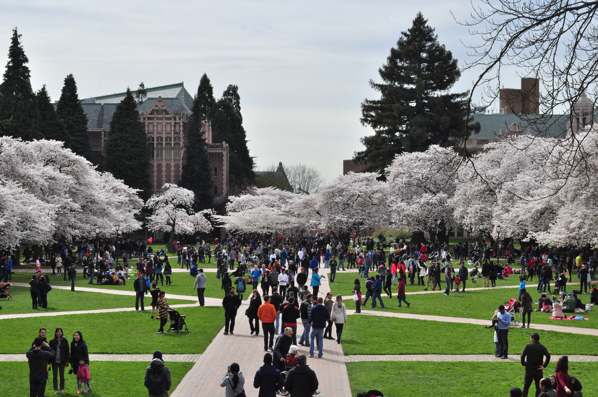 Why Do We Fall Bruce Wallpaper Diversity Numbers To Celebrate At University Of Washington