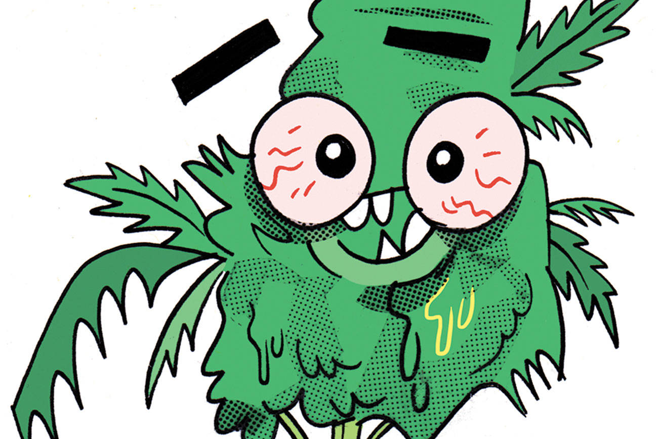 Smoke Weed And Brush Your Teeth Every Day Seattle Weekly