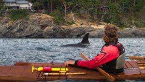 ORCAS-072