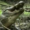 O impressionante vídeo em que um crocodilo mastiga e engole uma tartaruga