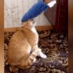 Gato ficou p*to com uma brincadeira de mal gosto feito pelo seu dono
