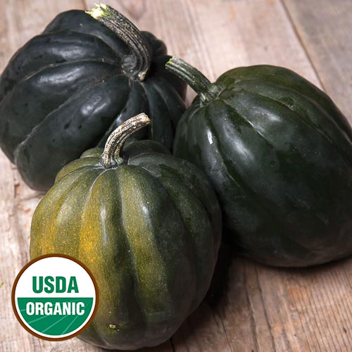 Garden Trellis Ideas - Seed Savers Exchange