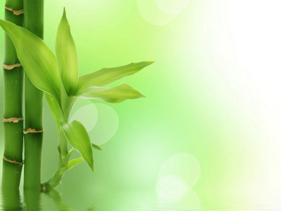 Powerpoint Background Bamboo - Download Free Bamboo Backgrounds and