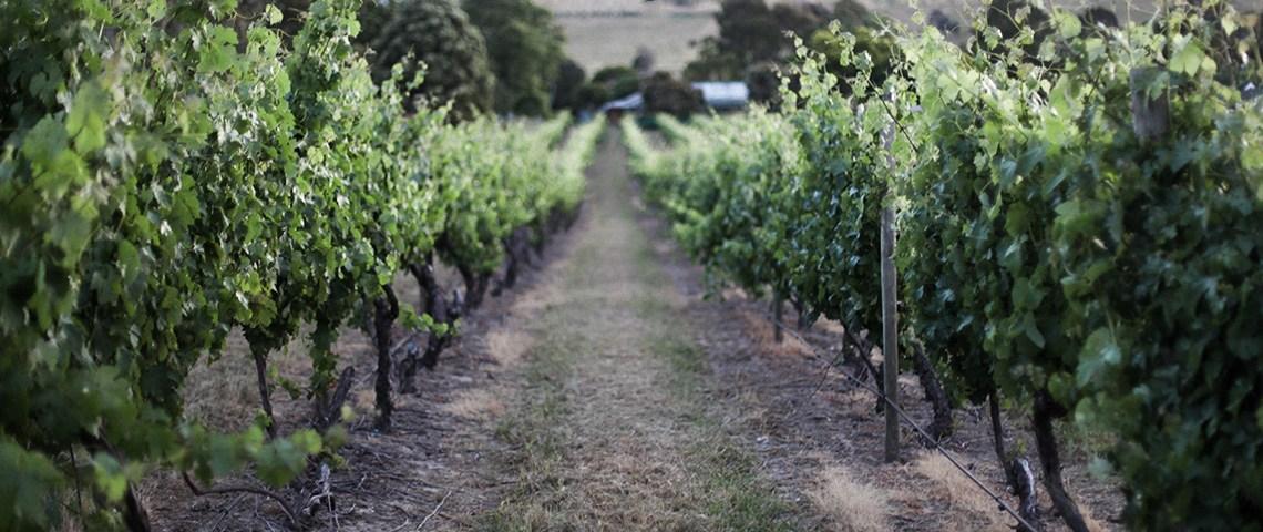 feature-seewantshop-grouon-vineyard