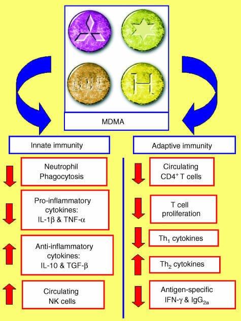 9 Effects of MDMA (Ecstasy) Drug + Sex, PTSD, Overdosing - Selfhacked